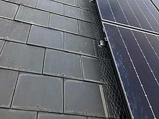Solar pv panel bird protection